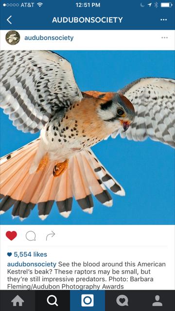 A recent Audubon Instagram post featuring a photograph taken by an Audubon award-winning member.